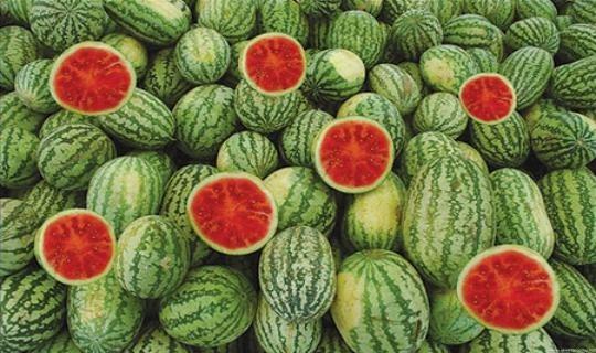 زراعة غزة: البطيخ خال من المبيدات الزراعية وتوضح أسباب ظهور العروق الصفراء