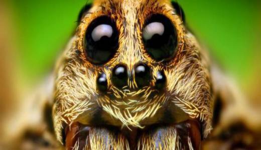 مكون واحد في منزلك يطرد الحشرات.. ما هو؟