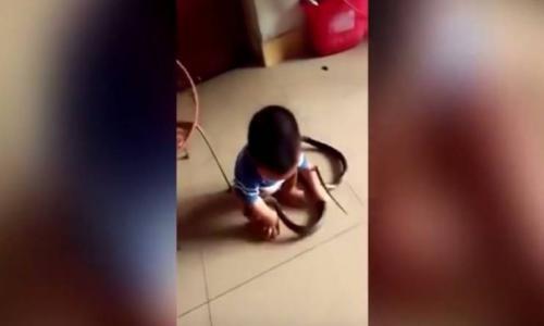فيديو - طفل يلعب مع أفعى تسللت إلى منزله!