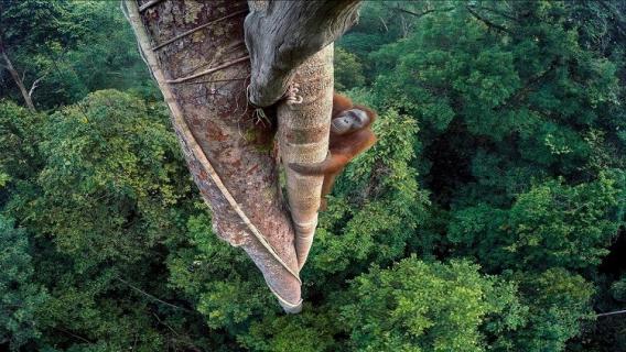 أجمل صورة الفائزة بمسابقة مصور الحياة البرية 2016