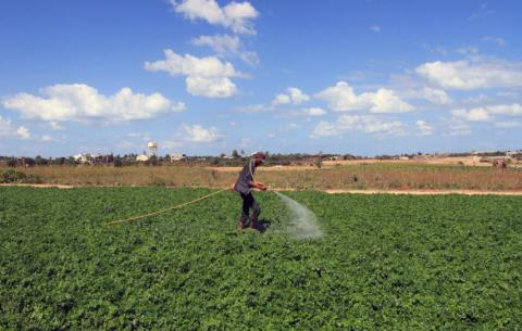 زراعة غزة: تسهيلات جديدة للمزارعين والعاملين بالقطاع الحيواني خلال أيام