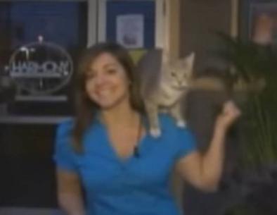 فيديو - قطة تقفز على كتف مراسلة مباشرة على الهواء