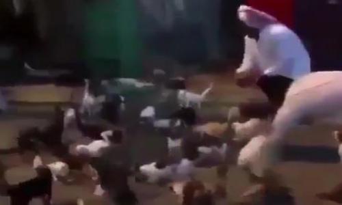 فيديو - عشرات القطط تجتمع لانتظار مواطن دأب على إطعامها يومياً في عنيزة