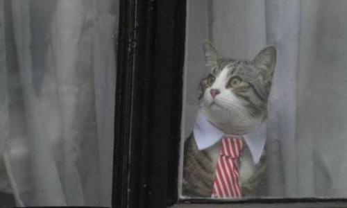 ما سر هذا القط الأنيق؟ هل تعرفون من يكون صاحبه؟