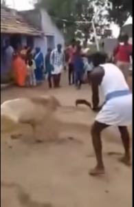 بالفيديو - كيف انتقم خروف من رجل حاول ذبحه بطريقة وحشية!