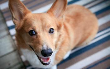 تعرف على الكلب اللطيف الذي ربما يجني أموالاً أكثر منك !
