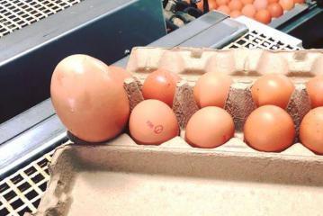 مزارع استرالي يعثر على بيضة ضخمة وما وجده بداخلها يثير دهشة الخبراء