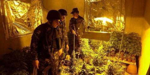 الأجهزة الأمنية تضبط مستنبت مخدرات داخل منزل في سعير