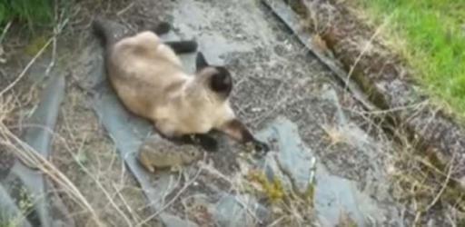 بالفيديو.. لحظة هروب أرنب من أنياب قطة ليقع بين مخالب بومة