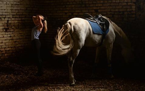 بالفيديو.. حصان يعرض راقصة لموقف محرج