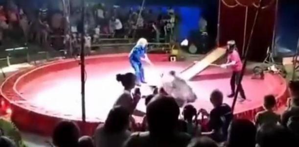 شاهد.. لحظة هجوم دب غاضب على مدربه في روسيا