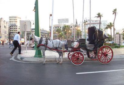 شاهد| حصان يفلت من عربة ترفيهية ويهرول بسرعة جنونية.. وهذا ما حدث معه!
