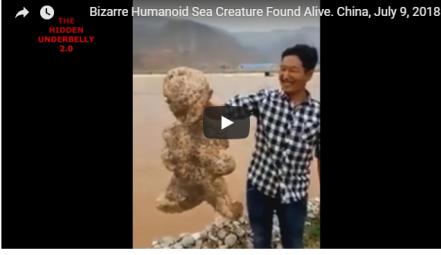 العثور على كائن بحري غامض يشبه الإنسان (فيديو)