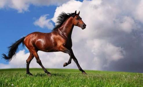 """في سابقة من نوعها.. حصان """"يقاضي"""" مالكته السابقة (صور)"""