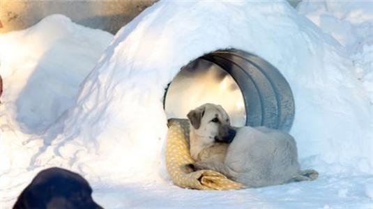 بما تشعر الحيوانات عند موت أقاربها؟