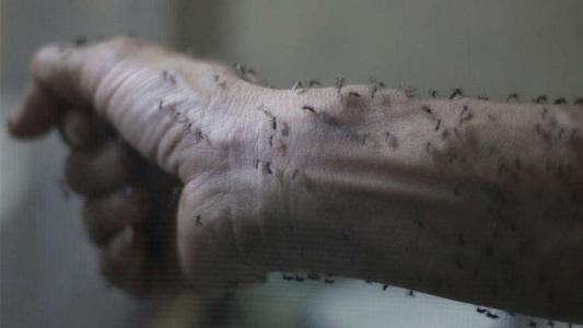 """مخاوف كبيرة من وباء خطير في إسرائيل """"حمى غرب النيل"""""""