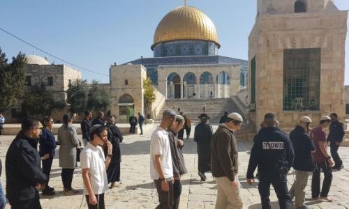 312 مستوطناً اقتحموا المسجد الأقصى خلال الأسبوع الماضي