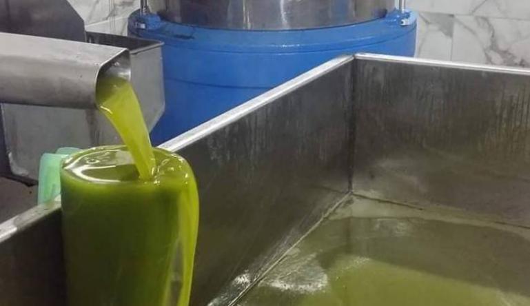 مزارعون فلسطينيون: نسبة زيت الزيتون لا تتجاوز 30% من المحصول العام