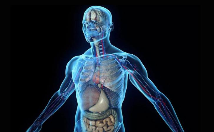 علماء يعلنون اكتشاف عضو جديد في جسم الإنسان