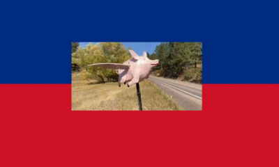 """اعرف الحكاية.. قائدو سيارات يفاجأون بـ""""خنزير طائر"""" على أحد طرق الولايات المتحدة (فيديو)"""