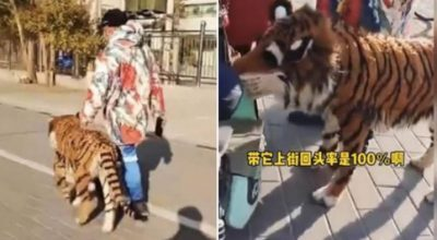 شاب يتجول بنمر في الشارع.. وامرأة عند رؤيته تفجر مفاجأة غير متوقع (فيديو)