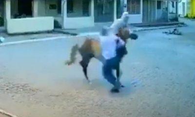 لصان يسرقان متجرا في البرازيل على ظهر حصان - شاهد اليوم