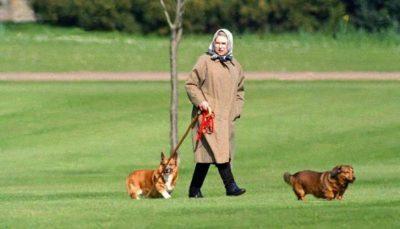 الملكة إليزابيث تطلق اسم أحد أفراد عائلتها على كلبها الجديد